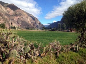 Sacred Valley Floor near maras