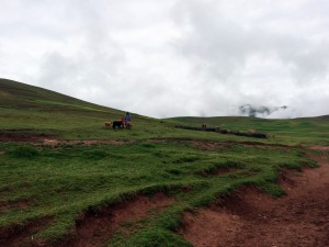 Andes shepherd