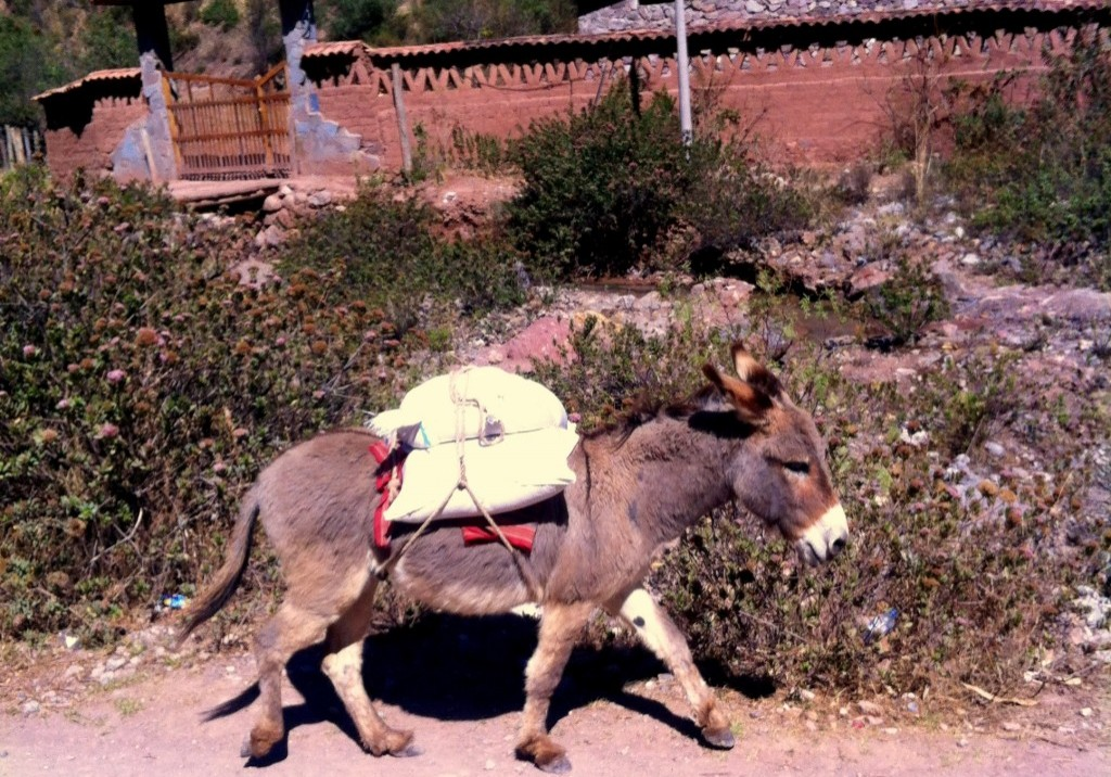 burro carrying maras salt