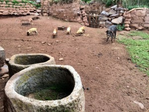 Hewn stone feed and water troughs for pigs
